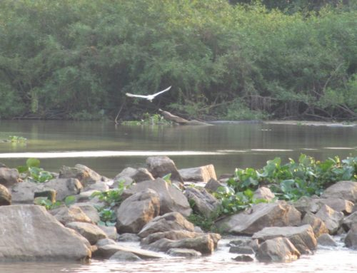 Brazil's Pantanal – the largest wetland in the world!
