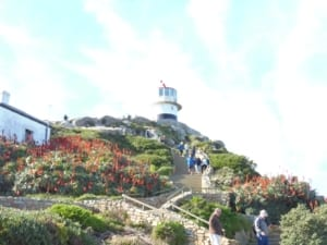 Cape Point (7)