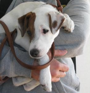 ferry dog