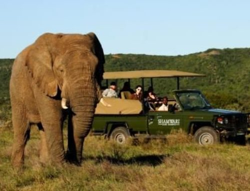 South Africa for all kinds of Safaris!