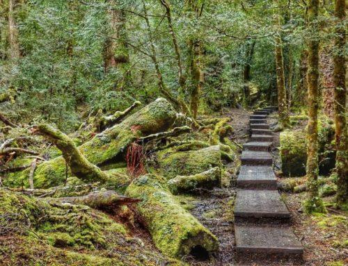 Tasmania Tales by Joanna Bradley